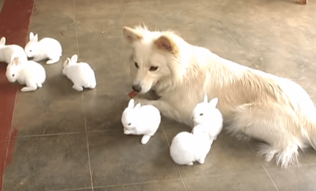 犬とうさぎ